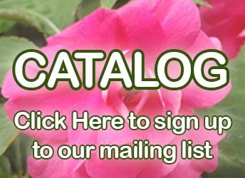catalog2021